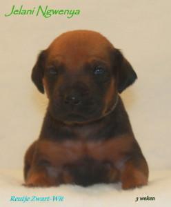 pup zwart-wit